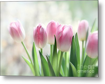 Awakening- Pale Pink Tulips Metal Print by Sylvia Cook