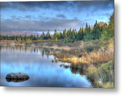 Awakening Your Senses Metal Print by Shelley Neff