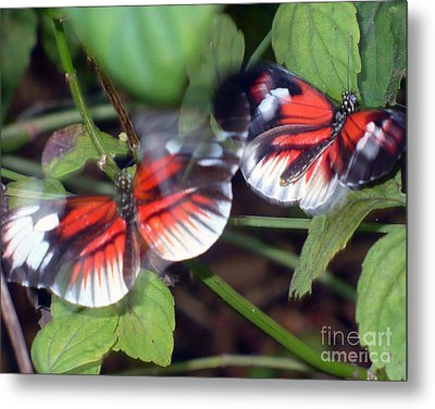 Away And Back Now Metal Print by Kryztina Spence