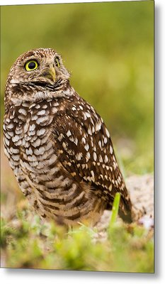 Awe Inspiring Owl Metal Print by Andres Leon