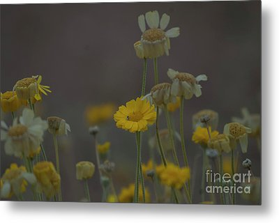 Metal Print featuring the photograph Az Flowers by Rod Wiens