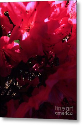 Metal Print featuring the photograph Azalea Abstract by Robyn King