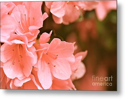 Metal Print featuring the photograph Azalea Victorian by Cathy Dee Janes