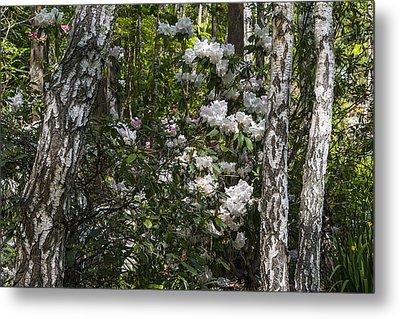Azaleas In The Trees Metal Print by Garry Gay
