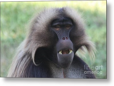 Metal Print featuring the photograph Baboon by John Telfer