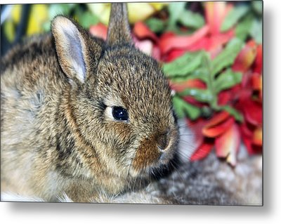 Baby Bunny Rabbit Metal Print by Karon Melillo DeVega