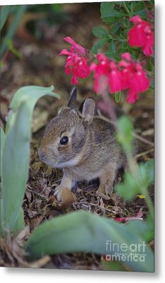 Metal Print featuring the photograph Baby Bunny by Tannis  Baldwin