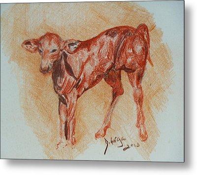 Baby Calf Metal Print by Deborah Gorga