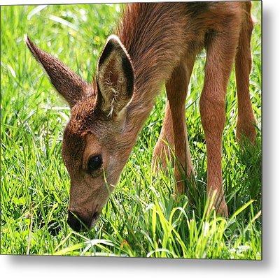 Baby Deer Metal Print by Ronnie Glover
