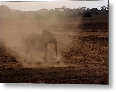 Metal Print featuring the photograph Baby Elephant  by Amanda Stadther