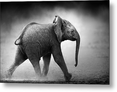 Baby Elephant Running Metal Print