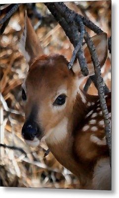 Baby Face Fawn Metal Print by Athena Mckinzie