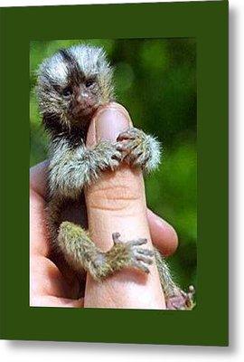 Baby Finger Monkey Green Border Metal Print by L Brown