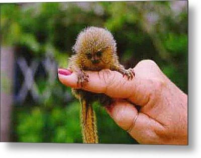 Baby Finger Monkey No Border Metal Print by L Brown