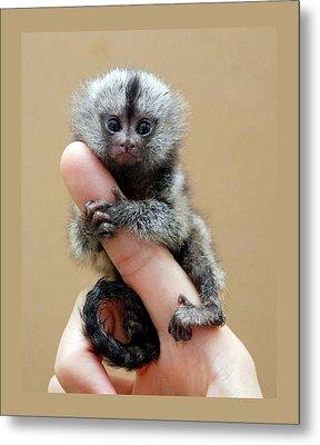 Baby Finger Monkey Tan Background Metal Print by L Brown