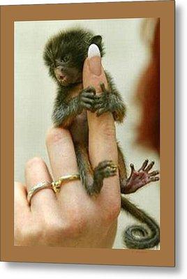 Baby Finger Monkey Tan Border Metal Print by L Brown