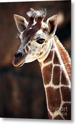 Baby Giraffe Metal Print by John Rizzuto