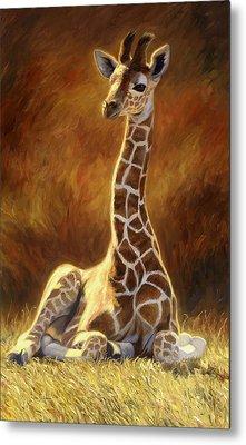 Baby Giraffe Metal Print by Lucie Bilodeau
