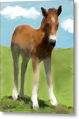 Baby Horse Metal Print by Mary M Collins