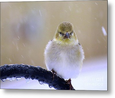Baby Its Cold Outside Metal Print by Brenda Bostic