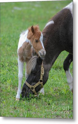 Baby Mini Metal Print by Amy Porter