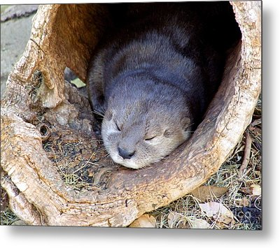 Baby Otter Metal Print by Mary Deal