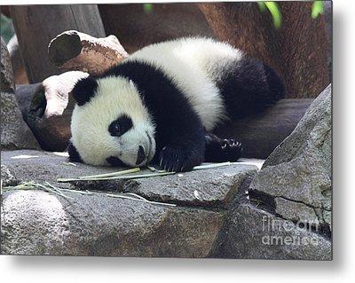 Baby Panda Metal Print