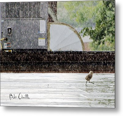 Baby Seagull Running In The Rain Metal Print by Bob Orsillo