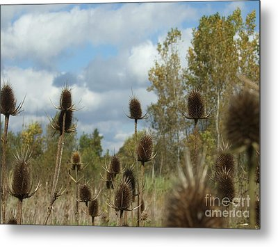 Metal Print featuring the photograph Back To Nature by Deborah DeLaBarre
