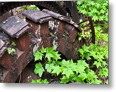 Metal Print featuring the photograph Back To The Forest by Cathy Mahnke