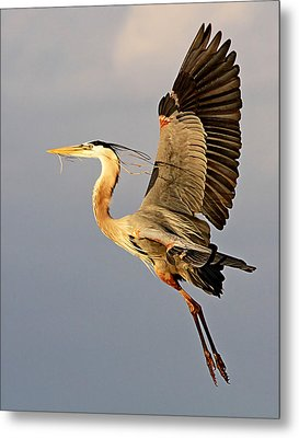 Back To The Nest Metal Print
