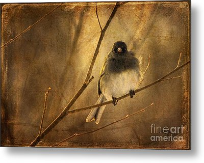Backlit Birdie Being Buffeted  Metal Print