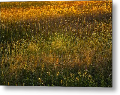 Metal Print featuring the photograph Backlit Meadow Grasses by Marty Saccone