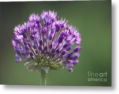 Backlit Sensation Metal Print