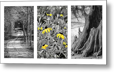 Backwoods Escape Triptych Metal Print by Carolyn Marshall