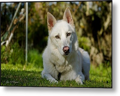 Backyard Dog Portrait 2 Metal Print