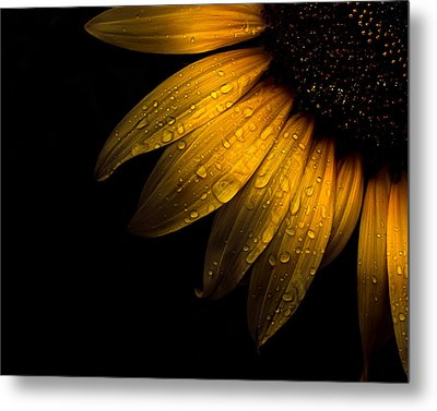 Backyard Flowers 28 Sunflower Metal Print by Brian Carson