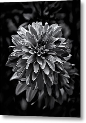 Backyard Flowers In Black And White 15 Metal Print by Brian Carson