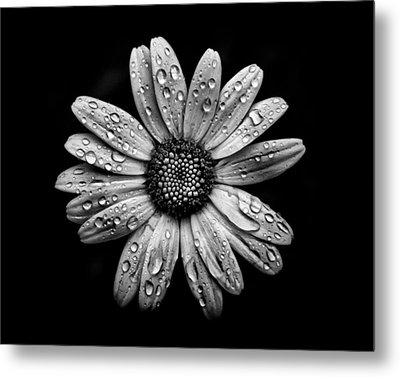 Backyard Flowers In Black And White 16 After The Storm Metal Print