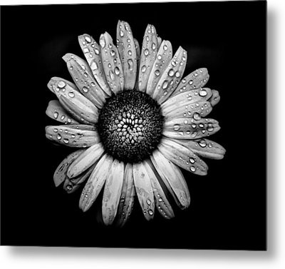 Backyard Flowers In Black And White 17 After The Storm Metal Print