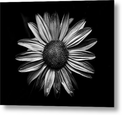Backyard Flowers In Black And White 18 Metal Print