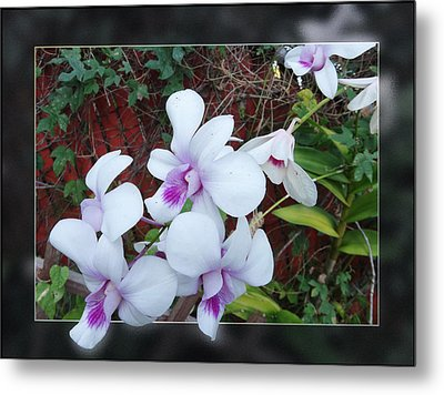 Metal Print featuring the photograph Backyard Orchid Two by Ginny Schmidt