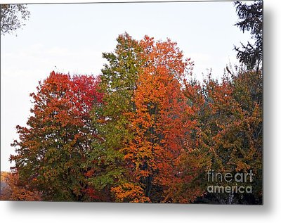Metal Print featuring the photograph Backyard Trees by Judy Wolinsky