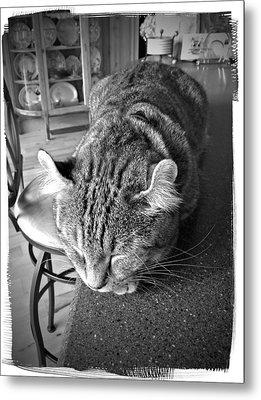 Bad Cat Metal Print by Susan Leggett