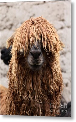 Bad Hair Day Metal Print by James Brunker