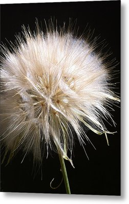 Bad Hair Day Metal Print by Stephanie Aarons