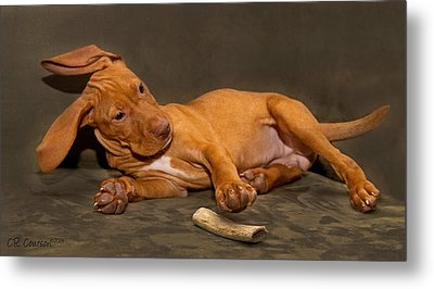 Bailey And Her Bone Metal Print by CR  Courson