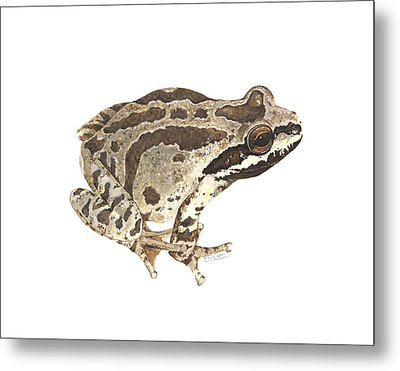Baja California Treefrog Metal Print by Cindy Hitchcock