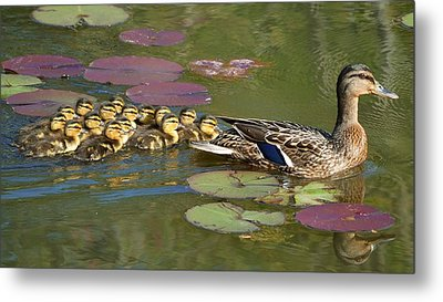 Bakers Dozen Metal Print by Mary Zeman
