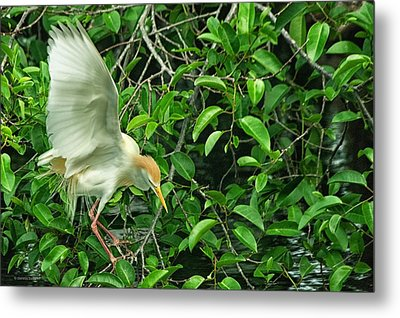 Metal Print featuring the photograph Balancing Act by Dennis Baswell